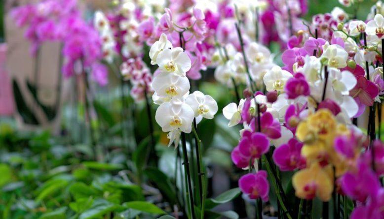 Jenis Bunga Anggrek Paling Langka Di Dunia