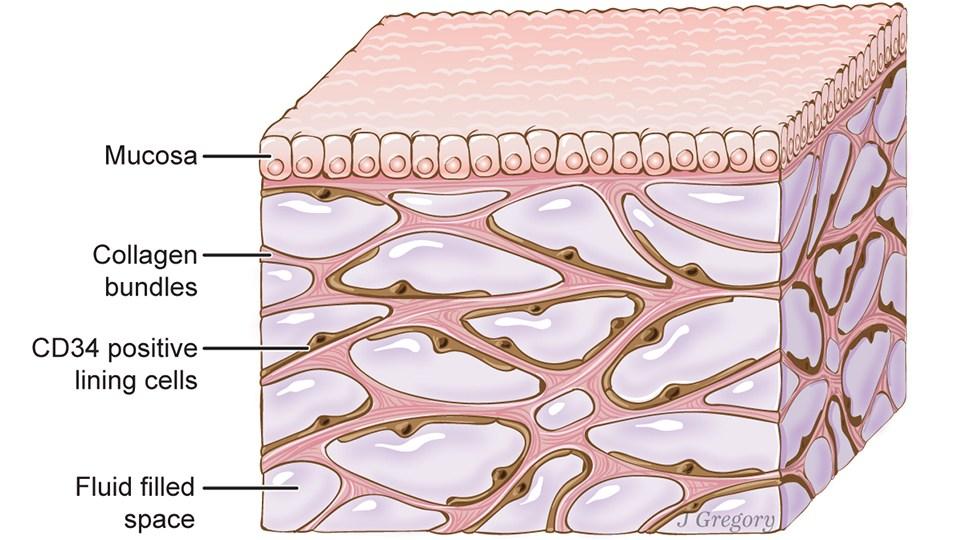 organ tubuh baru manusia